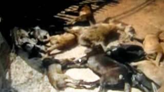 Itálie je pro zvířata peklo!!!I/ Italy  the hell for animals!