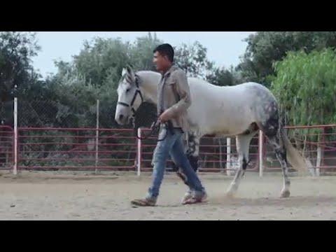 Perdidos De Sinaloa - La Pura Verdad (Video Oficial) (2016) -