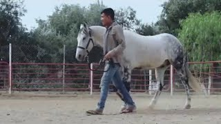 "Video Perdidos De Sinaloa - La Pura Verdad (Video Oficial) (2016) - ""EXCLUSIVO"" download MP3, 3GP, MP4, WEBM, AVI, FLV November 2017"