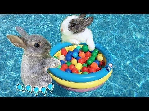 fiesta-en-la-piscina-jugando-con-mis-conejitos-bebés-sol-y-nube-con-una-alberca-/-funny-bunny