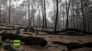Violenta 'tormenta de fuego' sorprende a los bomberos durante los incendios en Australia