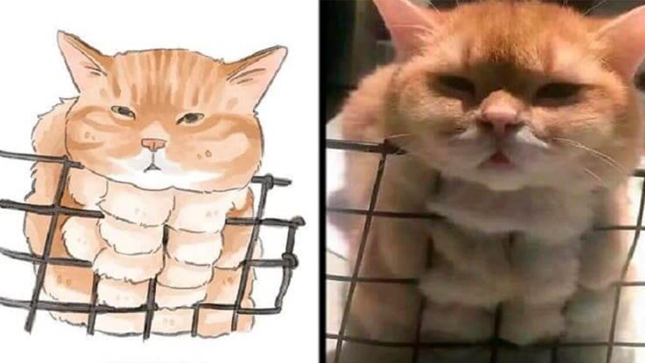 PISICI AMUZANTE, Comportamentul Acestor Pisici Este Imposibil De INTELES