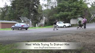 "People Aggressive German Shepherd ""axel:"" Private Seminar In Coos Bay, Oregon"