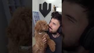 Willyrex jugando con sus perritos #Shorts