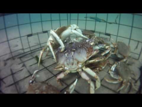 GoPro crabbing
