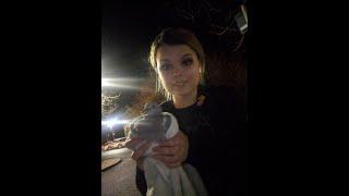 WE TRIED TO SAVE A BIRD