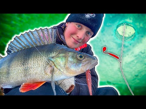 Trying DROP SHOT Fishing From ICE! (Perch Fishing) | Team Galant