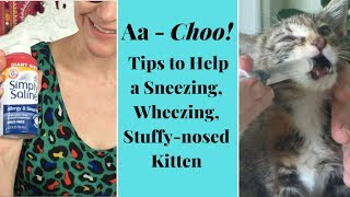 My Kitten Is Sneezing & Congested  Here's How to Help!
