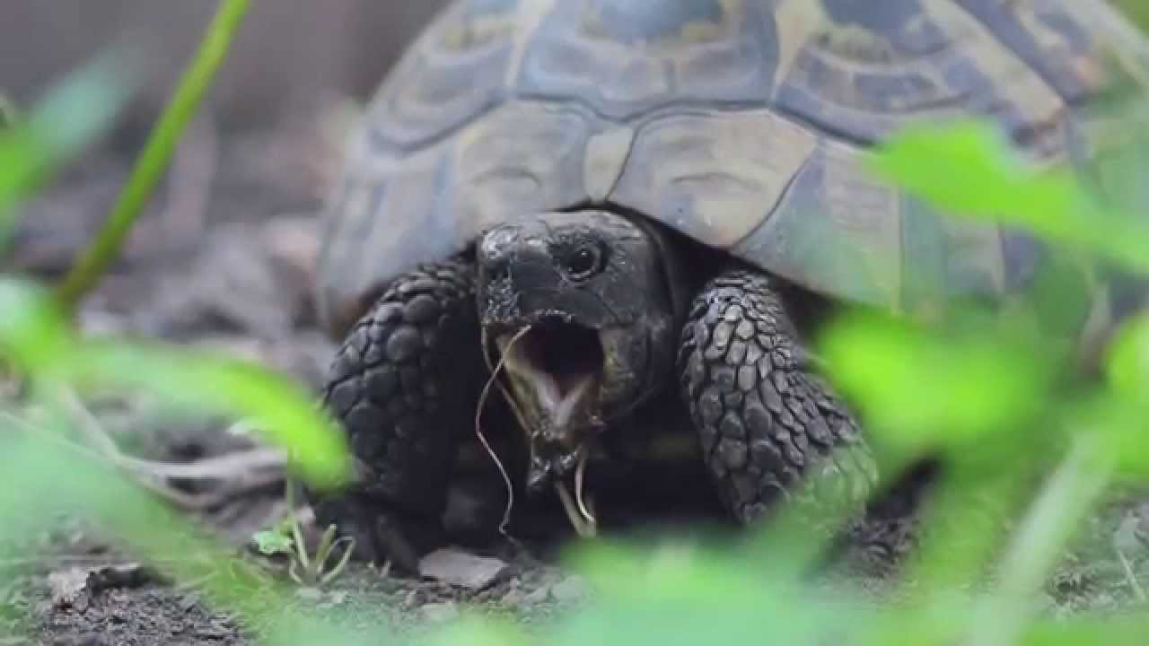 Music of Nature | Turtle Song?
