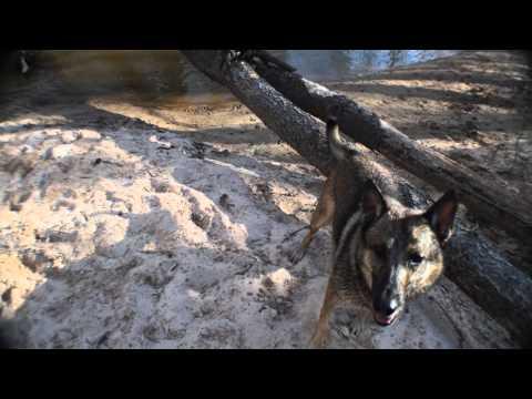 Dog agility jumping