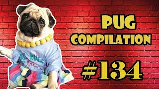 NEW ! Pug Compilation 134  Funny Dogs but only Pug Videos | Instapug