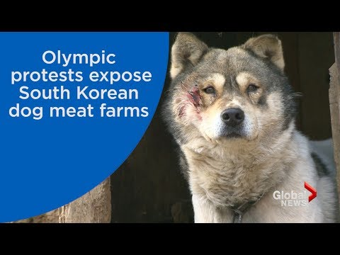 Protesters use Olympics to expose dog meat farms in South Korea