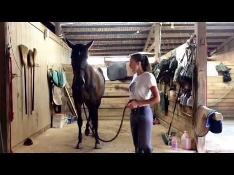 Teaching your horse to stand in the cross ties! Ellie O'Brien Finesse Equestrian Training