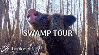 Swamp Tour Louisiana - Going Down the Bayou from NOLA