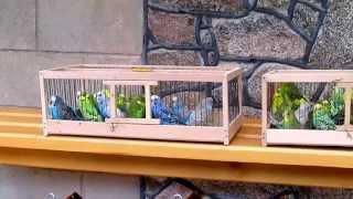 Попугаи, канарейки, новые приобретения
