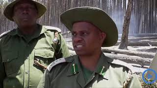 Mysterious fire destroys more than 10 acres of forest trees in Elgeyo-Marakwet