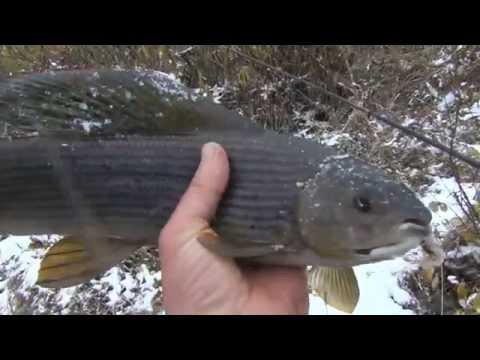 таежная рыбалка сказочная тайга рыбалка на хариуса
