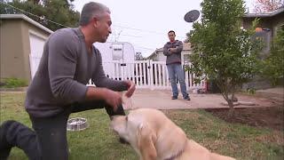 كلاب: اشهر مدرب كلاب اصيب بعضة أثناء ترويضه لكلب.