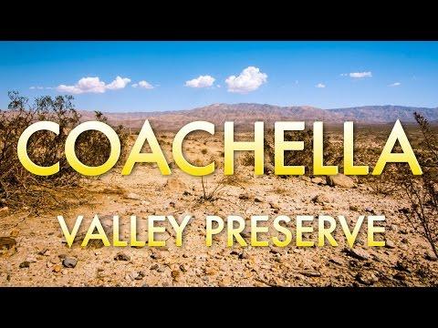 Coachella Day Trip: Visit the Coachella Valley Preserve