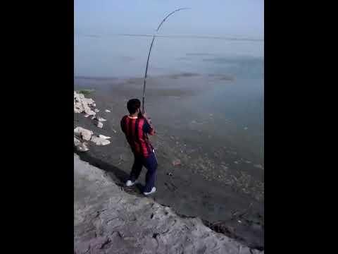 Fishing Wallago(Malhi) at Indus River Chashma(Fishing in Pakistan)
