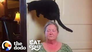 cat-jumps-over-kitchen-floor-because-she-thinks-it-s-evil-the-dodo-cat-crazy