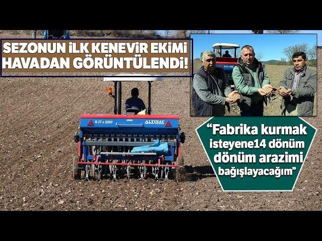 Samsun'da Sezonun İlk Kenevirleri Ekilmeye Başlandı...