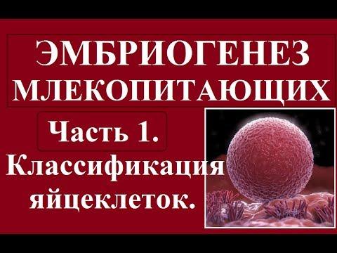 Эмбриология млекопитающих и человека. Ч.1. Классификация яйцеклеток и зигот.