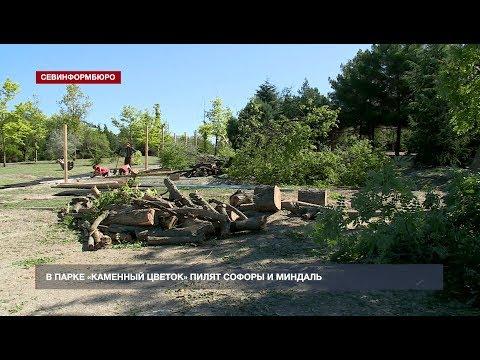 В Севастополе вырубают парк напротив ТЦ «Муссон»