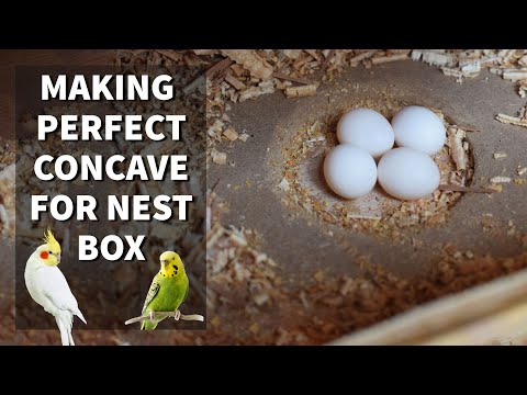 DIY  Make A Perfect Concave For Nest Box At Home | Budgies | Cockatiels | Love Birds
