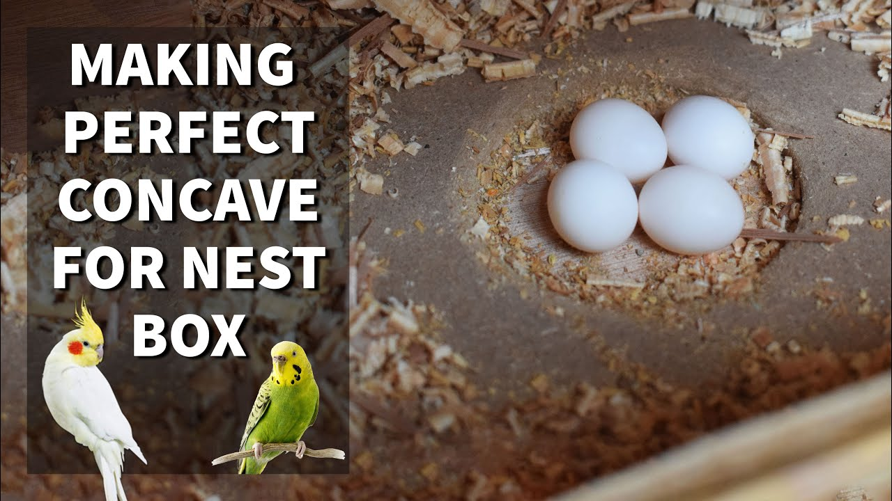 The Hutch Company Easy View Budgie Nesting Box With Free Concave