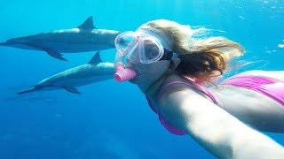 SWIMMING WITH DOLPHINS IN THE WILD! (10.15.15 - Day 2360)