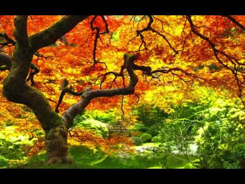 Autumn by Paolo Nutini