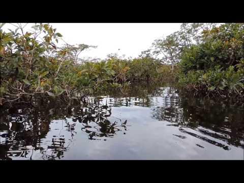 AMAZONAS  JUNGLE   ECUADOR-WILDLIFE RESERVE ON CUYABENO RIVER   - HD