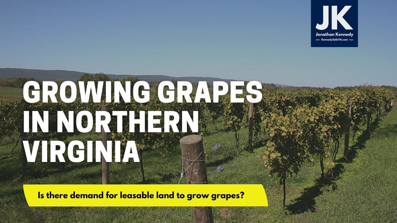 Is there demand for leaseable land to grow grapes in Northern Virginia?