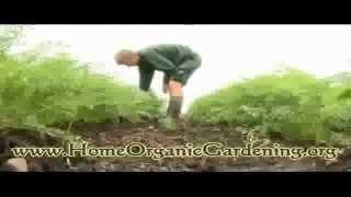 Organic Gardening - How To Build Up Healthy, Fertile Soil Without Costing A Fortune