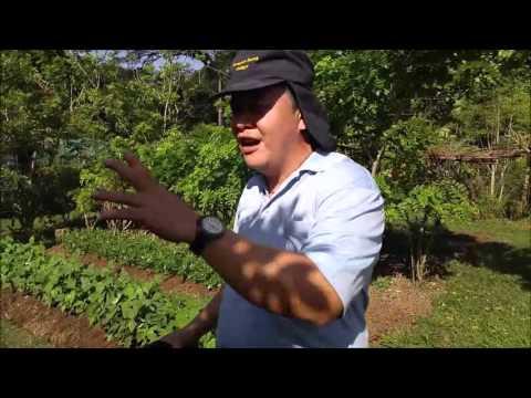 Demo Garden - Hedge Trees and Organic Fertilizer