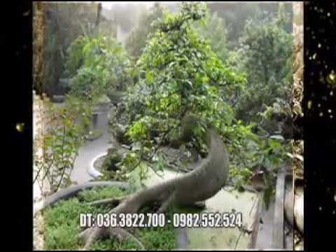 Cay canh dep Viet Nam (Nhà vườn Nguyễn Đăng Giáp - Thái Bình)