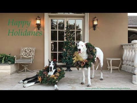 Great Danes Sing Along Happy Holidays Holidanes Andy Williams