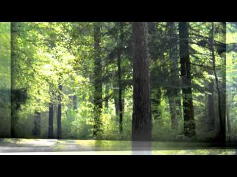 Andy Compton Feat. Rainy Payne
