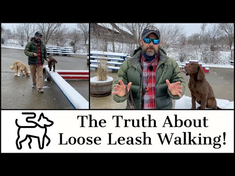 Puppy Training: The Truth About Loose Leash Walking!