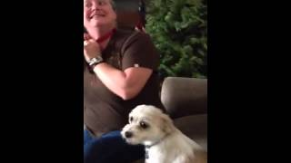 Dog Bark Shock Collar