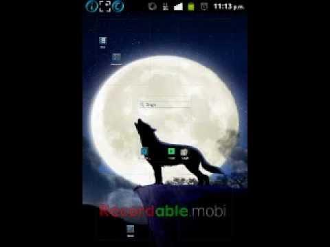 Wallpaper Lobo Fondo Pantalla Animado Android Youtube