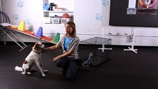 How to Teach Your Dog to Pull on a Rope | Dog Tricks
