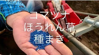 ほうれん草とコマツナの種まき 【病気と害虫予防】19/9/14