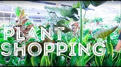 Plant Shopping in ARIZONA