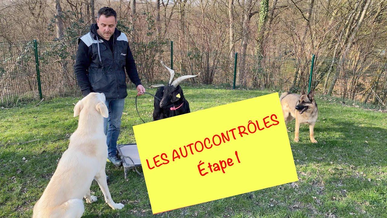 Apprendre les autocontrôle à son chien - ÉTAPE 1