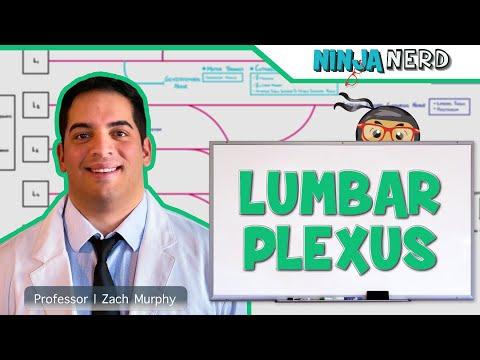 Neurology: Lumbar Plexus