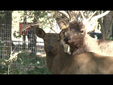 В городском парке Невинномысска поселились олени