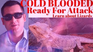 Cold Blooded Attack humans? Learn about Bearded Dragons (Official Video)