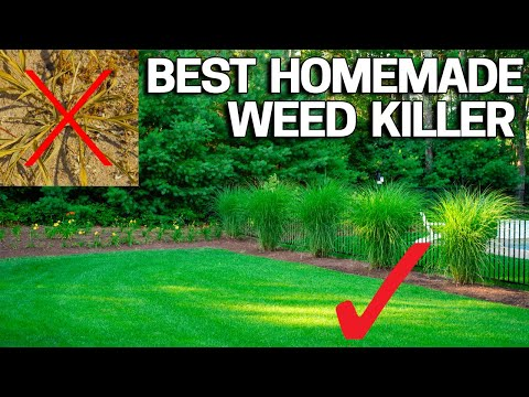 Best Homemade Weed Control - Natural & Safe